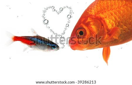 two fish in love - stock photo