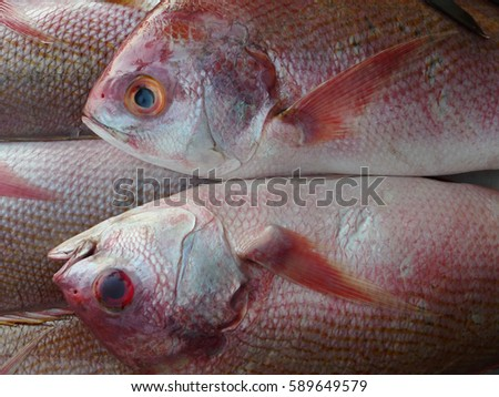 Two fish of the sea, lie on each other, pink scales, fins pink, white belly, blue eyes, a gentle touch, a beautiful couple, can be used as a modern interior photos.