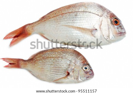 two fishes closeup over white background