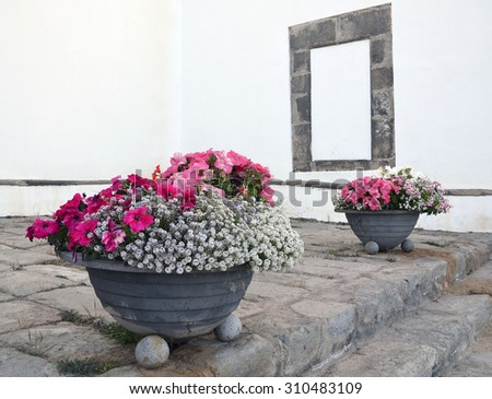 Two flowerpots with petunia flowers. - stock photo