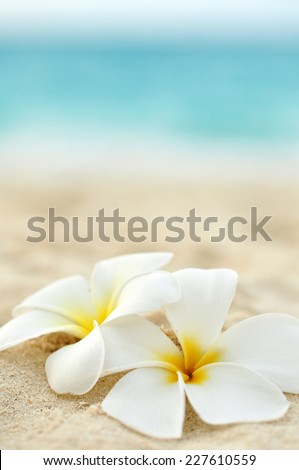 two flowers on the beach - stock photo