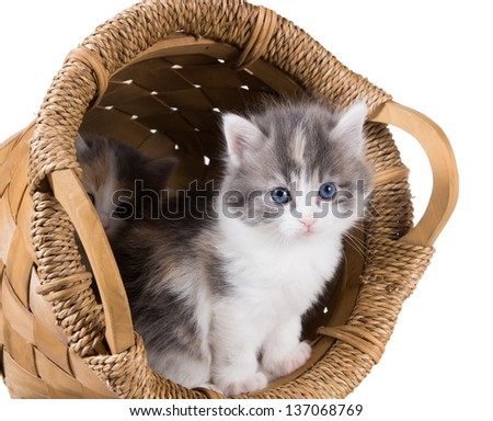 Two fluffy kitten in a round basket isolated on white background - stock photo