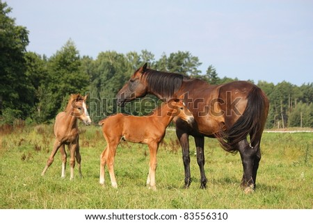 Two foals and their mother - stock photo