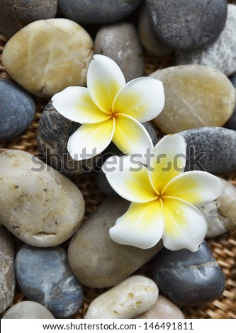 Two frangipani flower with stones on mat