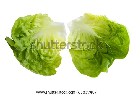 Two fresh boston lettuce leaves isolated on white