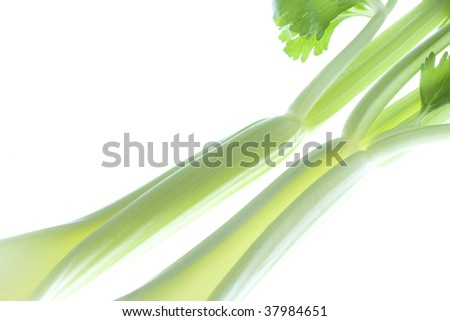 Two fresh celery on the white table.
