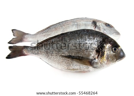 Two fresh gilthead seabreams on white background - stock photo