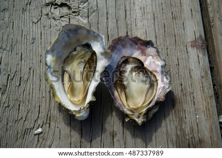 two fresh oysters on wooden background