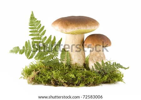 Two fresh porcini mushrooms in a green moss isolated on white - stock photo