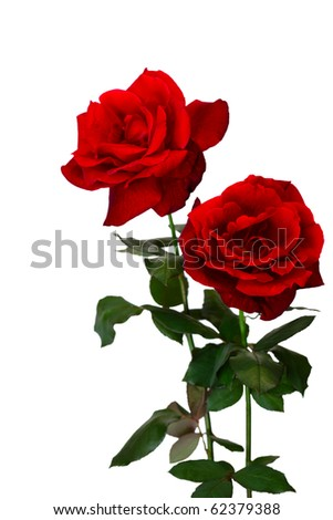 Two fresh red roses isolated over white background - stock photo