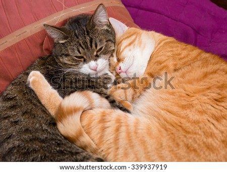 Two friendly pet cat sleeping together on the bed