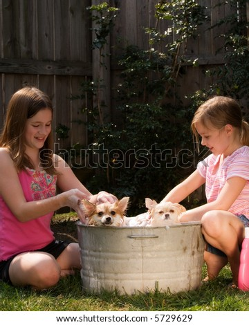 Two friends bathing two Pomeranian puppies in an old tin tub. - stock photo