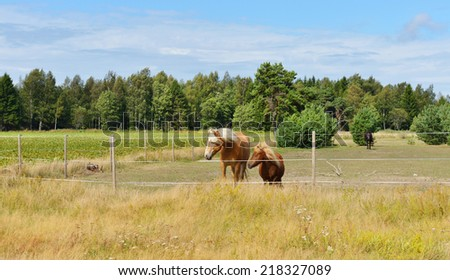 Two friends. Horse and pony in pasture  - stock photo