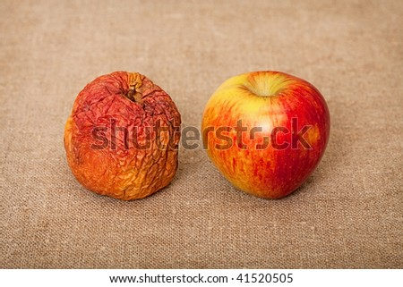Two fruit against a canvas - bad and good apples - stock photo