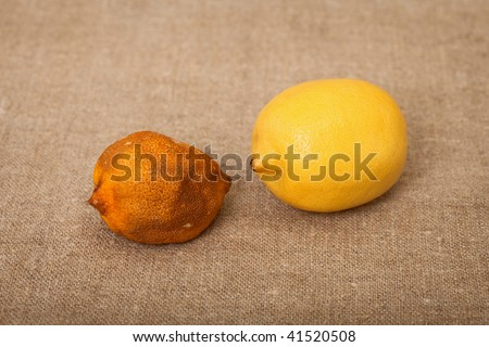 Two fruit against a canvas - bad and good lemons - stock photo