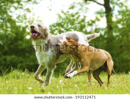 two fun dogs at play - stock photo