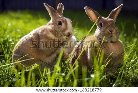 Two funny bunny in the grass. One slightly frightened face. / Rabbits in the grass - stock photo
