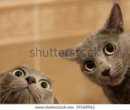 Two funny cats look in wide eyed astonishment - stock photo