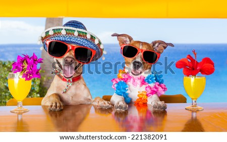 Two Funny Dogs Drinking Cocktails At The Bar In A Beach Club Party With Ocean View