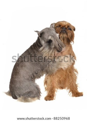 Two funny dogs playing hugging each other, isolated - stock photo