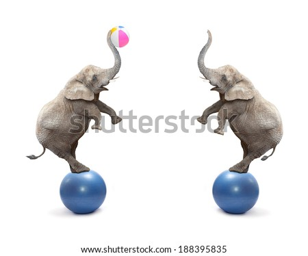 Two funny elephants playing with ball. - stock photo