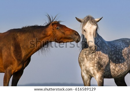 Two funny horse portrait on blue sky background