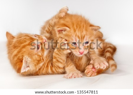 Two funny playful little red hair kittens playing with each other - stock photo