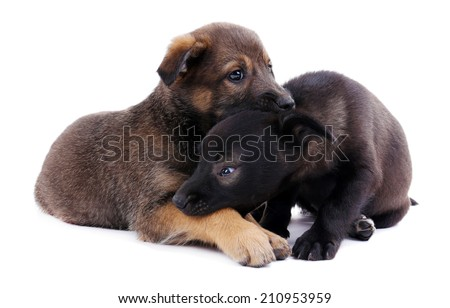 Two funny puppies isolated on white - stock photo