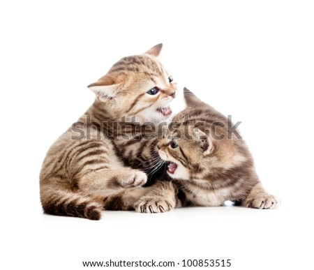 two funny small kittens playing with each other - stock photo