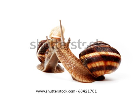 two garden  snails and a small snail,representing a family