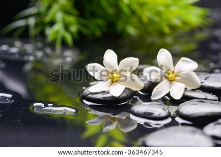 two gardenia with therapy stones - stock photo
