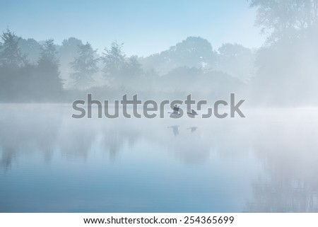Two geese flying by on a foggy autumn morning over a river reflecting their shadows on the water surface. - stock photo