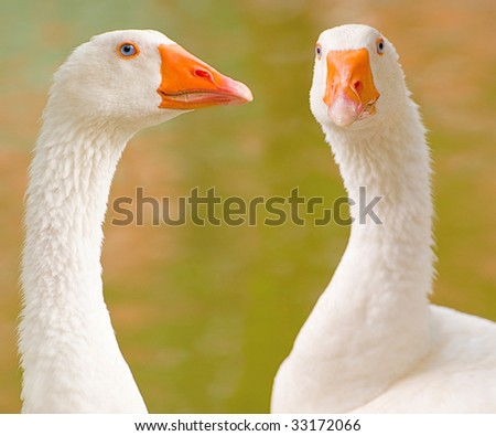 Two geese portrait, Figures front and side