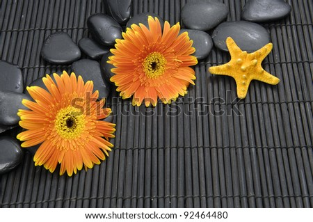 Two gerbera flower and zen stones with starfish - stock photo