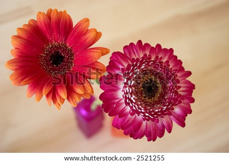Two gerbera in a vase - stock photo