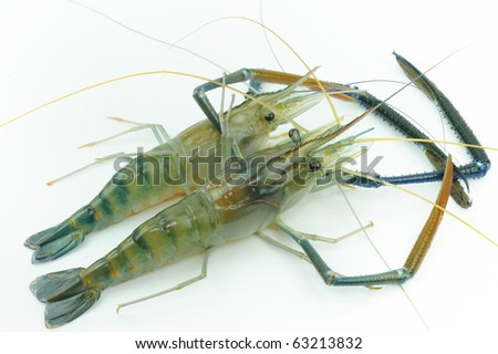 Two Giant river prawn