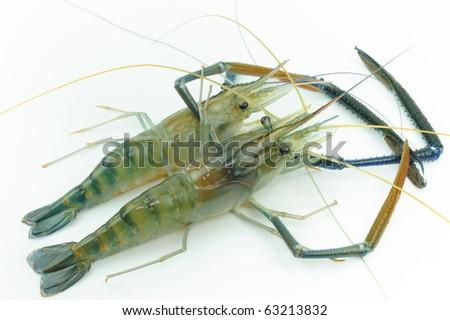 Two Giant river prawn - stock photo