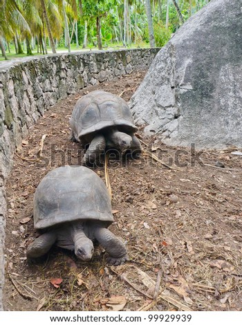 Two Giant Running Turtles on Seychelles, Indian Ocean, Africa - stock photo