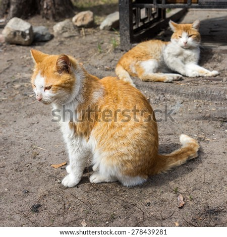 two ginger striped cats resting on a sidewalk - stock photo