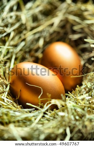 Two gold eggs in nest close up - stock photo