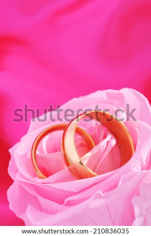 Two golden rings in pink rose on pink background - stock photo