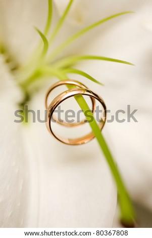 Two Golden Wedding Rings on flowers macro shot - stock photo