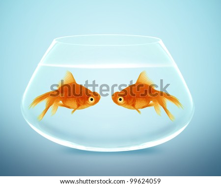 Two goldfish  in fishbowl falling in love, lose one's heart - stock photo