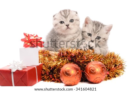 two gray kittens sibs with christmas gifts and coppery and golden decorations isolated on white background - stock photo