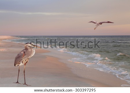 Two Great Blue Herons on the Beach at Sunrise - stock photo