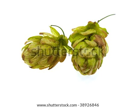 Two green cones of hop isolated on a white background - stock photo