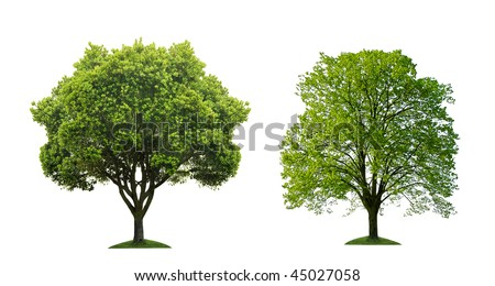 Two green tree on white background - stock photo