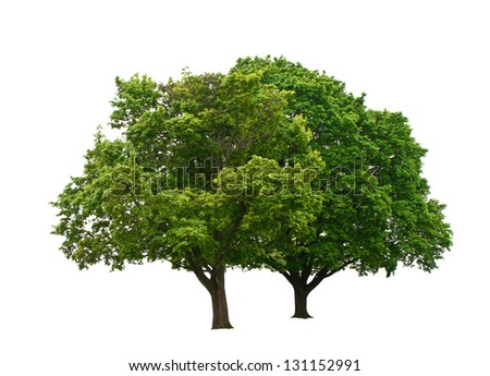 two green trees isolated on white - stock photo