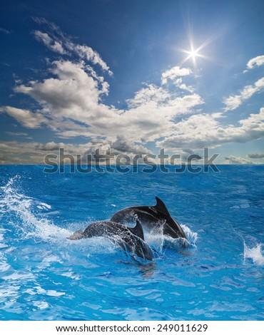 two grey dolphins jumping in blue water - stock photo
