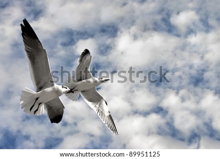 Two Gulls flying together high in a blue sky with puffy white clouds - stock photo